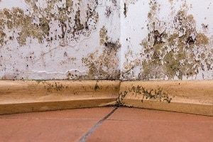 feucht, Eigenheim, verschimmelt, Bakterien