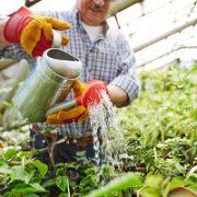 Pflanze, gießen, Wasser, Garten