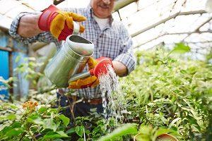Bei Tipp-zum-Bau erfahren Sie alles wichtige über Pflanzen für Ihr Zuhause.