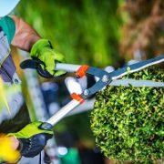 Garten-Astschere-Werkzeug