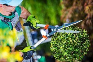 gärtnern, Beruf, gepflegt, schneiden