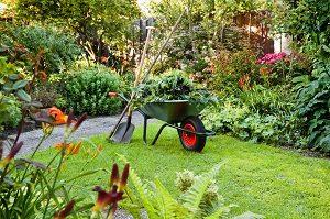 Tipp-zum-Bau erklärt Ihnen, welche Bedingungen erfüllt sein müssen, damit Pflanzen wachsen.