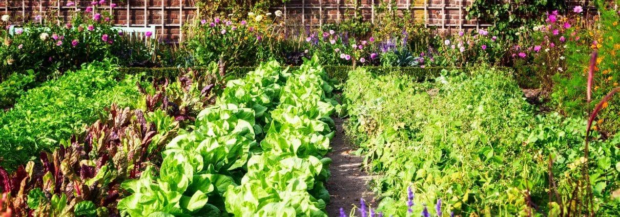 Genießen sie Gemüse aus Ihrem eigenen Gemüsegarten. Tipp zum Bau zeigt Ihnen wie.