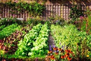 Tipp zum Bau weiß, dass das beste frische Obst und Gemüse oft direkt aus der Gärtnerei in Ihrer Nähe kommt.