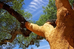Tipp zum Bau erklärt Ihnen, warum eine umweltfreundliche Holzgewinnung bei Ihrem Bodenbelag wichtig ist.