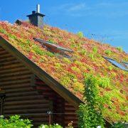 Die extensive Dachbegrünung Ihres Flachdachs ist nicht begehbar.