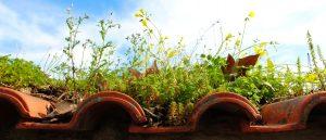 Sprießende Flora & Fauna auf Ihrer Dachbegrünung erreichen Sie mit Tipp zum Bau.