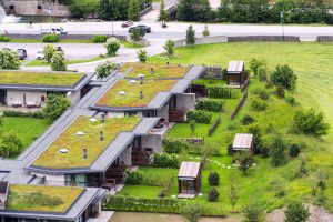 Tipp zum Bau erklärt Ihnen alles rund um das Thema Dachbegrünung bei Ihrem Flachdach.