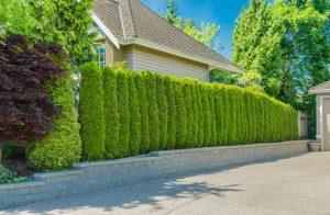 Tipp zum Bau informiert Sie über den Vor- und Nachteil einer Bepflanzung.