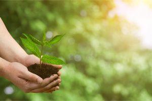 Nachhaltigkeit ist uns bei Tipp zum Bau sehr wichtig.