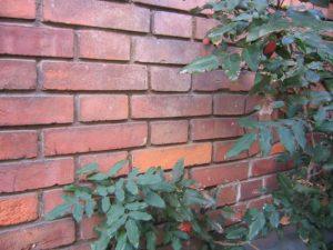 Bei Tipp zum Bau lesen Sie alles über die Pflanzenarten für die Fassadenbegrünung.