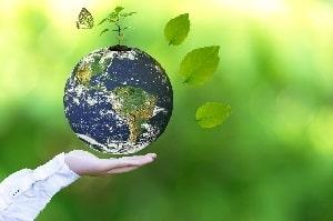 Erfahren Sie bei Tipp zum Bau, welcher Sichtschutz die beste Umweltbilanz hat.